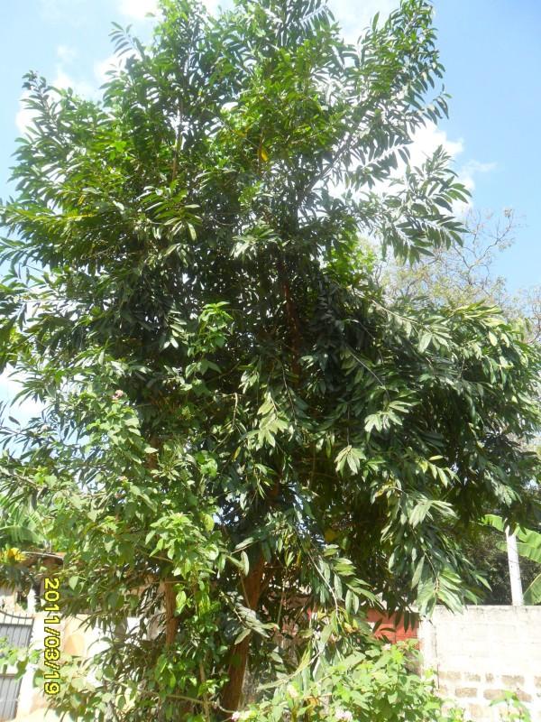 Azhignchil_in_Jaffna