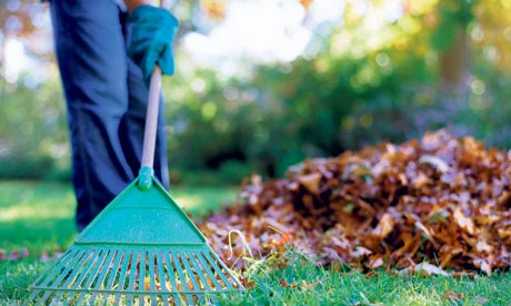 Person-raking-leaves-in-g-002
