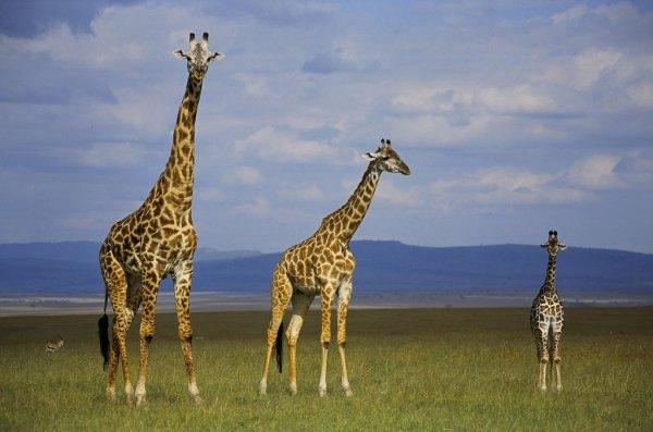 tall taller tallest