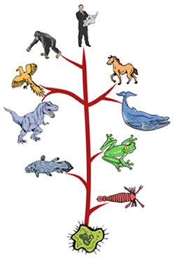 tree-o-life