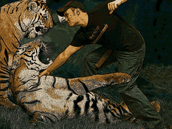 fighting tiger
