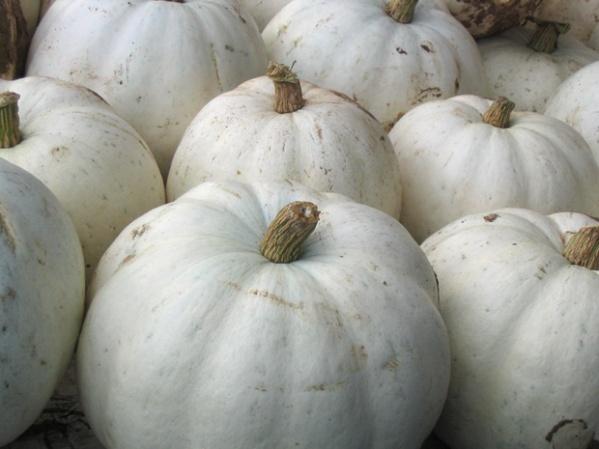 WhitePumpkins