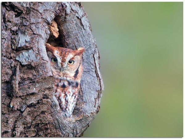 owl tree1
