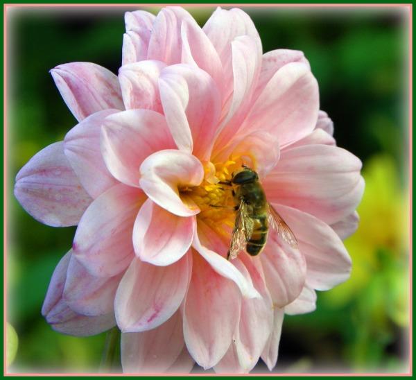 bee-sweet-in-pink