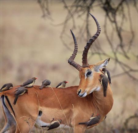 birds_gazelle