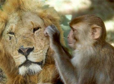 lionmonkey