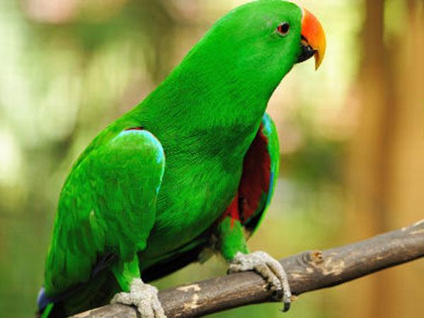 26-parrot1