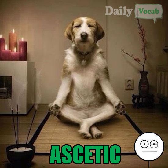 asceticdog