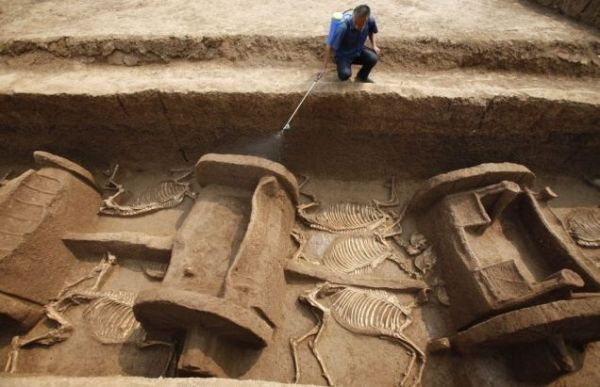 horse and chariot burial 3000 year Western Zhou dynasty 2011 Luoyang