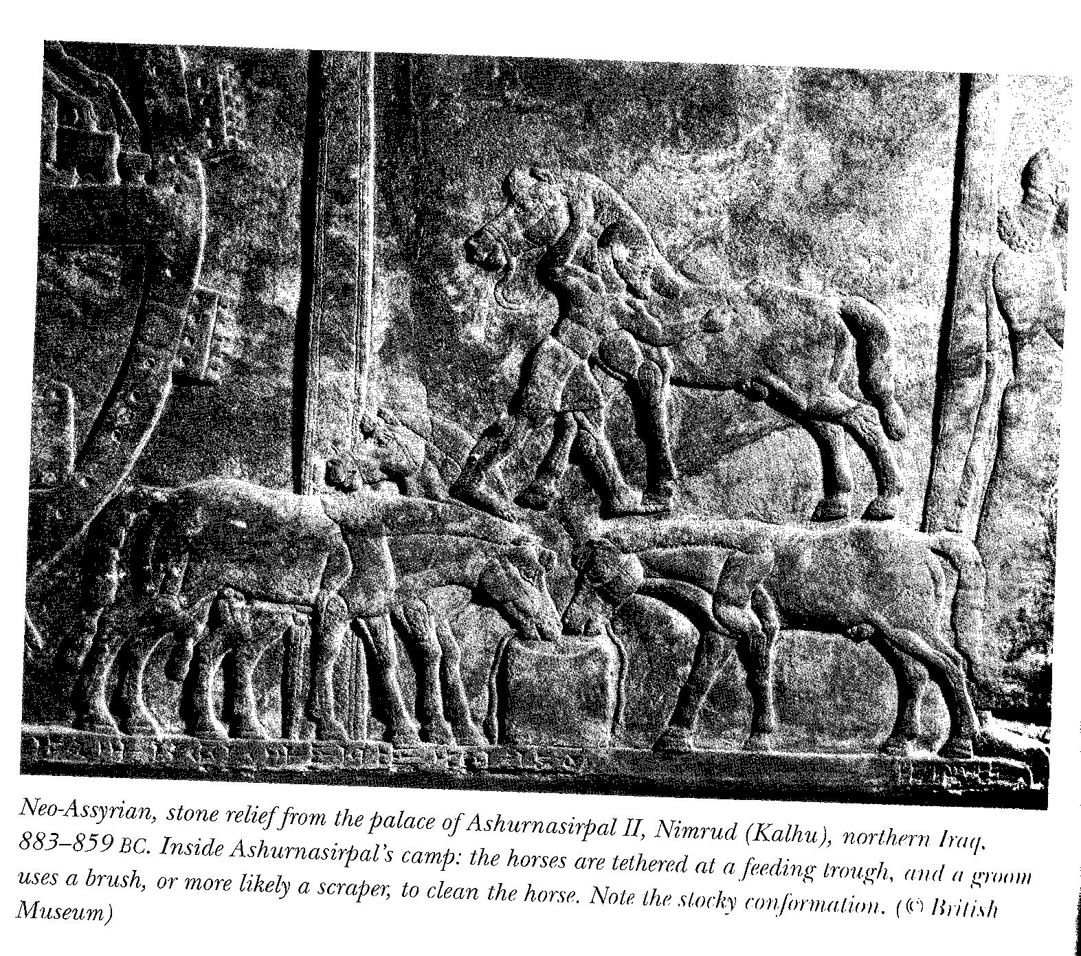 Nimrud, northern iraq 880 BCE