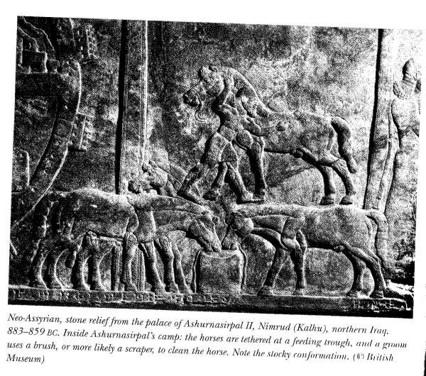 Nimrud, northern iraq 880 BCE