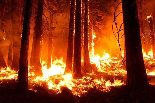 wildfires-