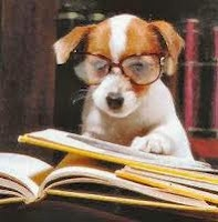dog-with-books-and-glasses