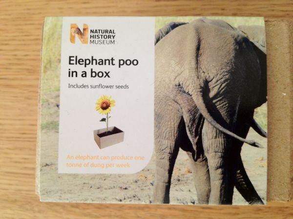 elephant-poo-11