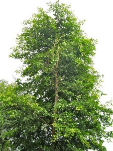 Bili_Tree_CM_Farm_Saldi