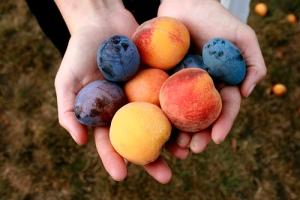 fruit-in-hand