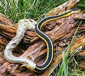 shed-snake-skin2