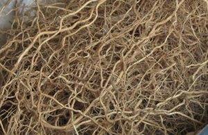 Fragrant_root_vetti-ver