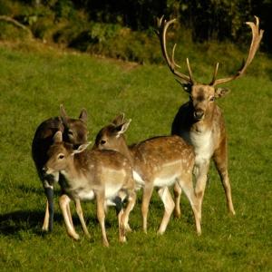 Deers-deer-3417187-640-640