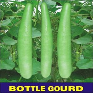 OP-Bottle-Gourd-PSPL