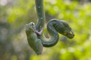 snake and frog