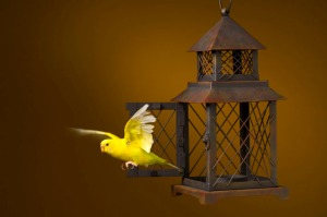 bird_escaping_from_cage