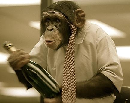 monkey-drinking