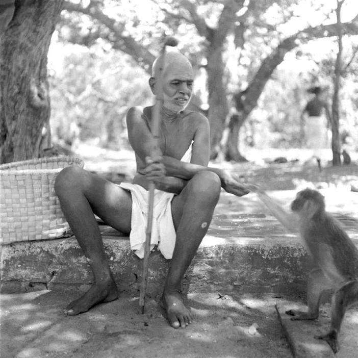 குரங்கு, ரமணர்