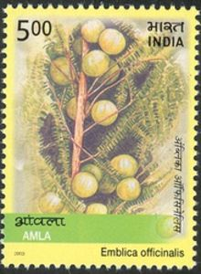 Medicinal-Plants-of-India---Amla-Emblica-officinalis