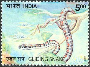 Nature-India---Snakes---Gliding-Snake