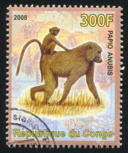 CONGO - CIRCA 2008: stamp printed by Congo, shows Olive baboon, circa 2008