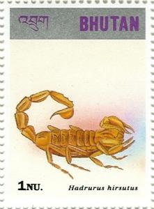DesrtHairyScorpion