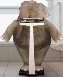 elephant weight