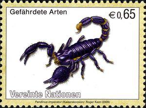 Emperor-Scorpion