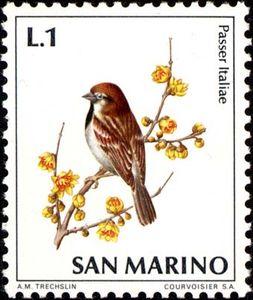 Italian-Sparrow-Passer-italiae