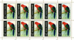parrot 6