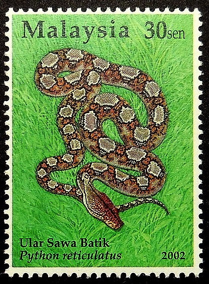 python malay