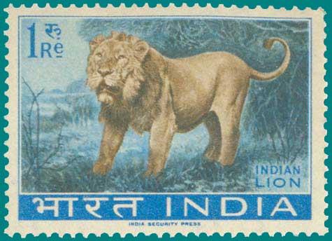 476_Lion