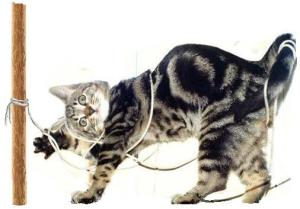 Cat-tied-to-a-pole