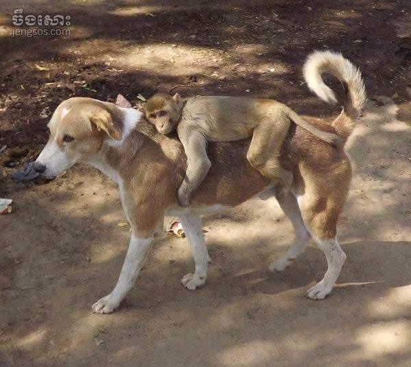 dog,monkey1