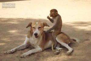 dog,monkey3