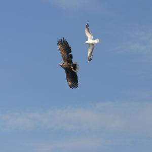 eagle-and-seagull