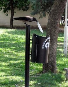 crow plate2