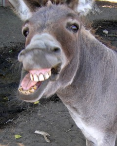 donkey-240x300