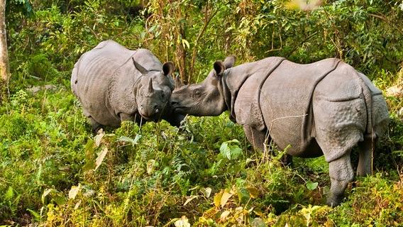 forest-man-jadav-rhino