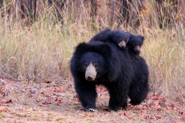bear_with_cubs_-_original-1