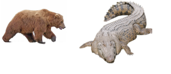 croc, bear