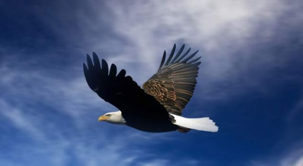eagle-flying-on-sky