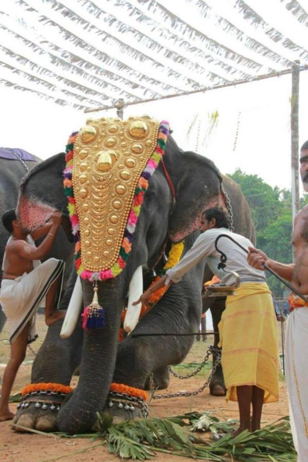 elephant blaring 2