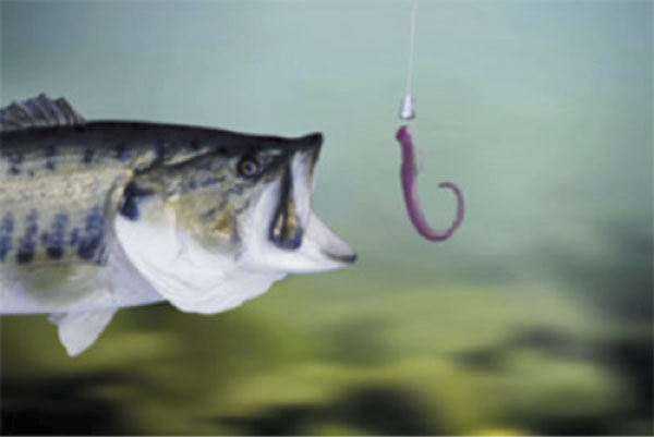 Live-Fishing-Worms-as-Bait